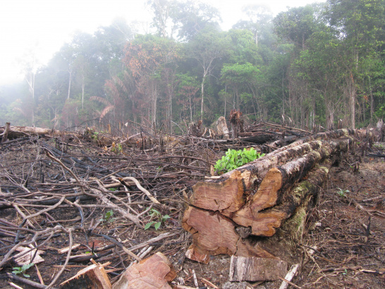Amazon, deforestation, logging, rainforest, timber