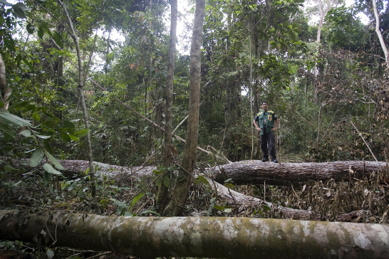 Illegal logging, forest, National Tapajos Rubber Tree Forest, Brazil