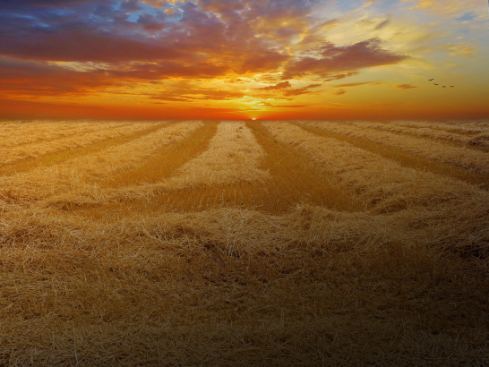 magnificent-view-wheat-field-cornfield-cereals
