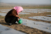 A woman hand-watering crops in Ningxia