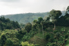 Salento, Colombia, coffee plantation, forest, agriculture, café