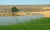 irrigation, water, agriculture, arid